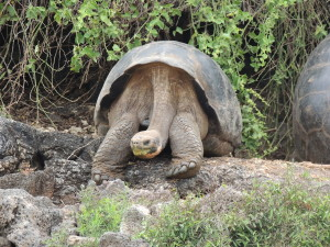 Resident of Galapagos Research Centre